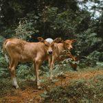 Carne Artificial startups