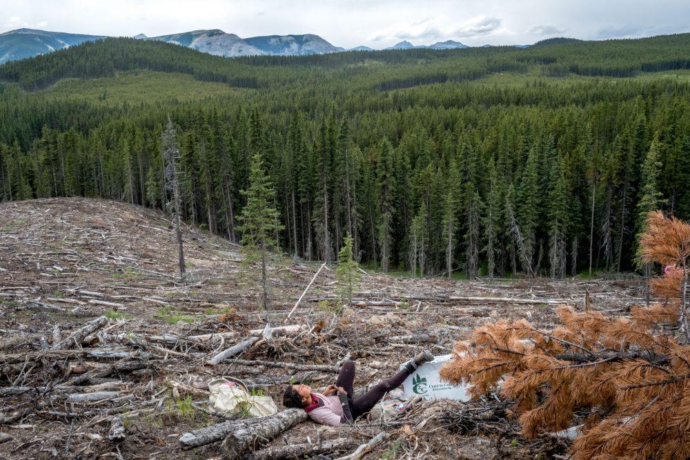Startups reforestacion españa