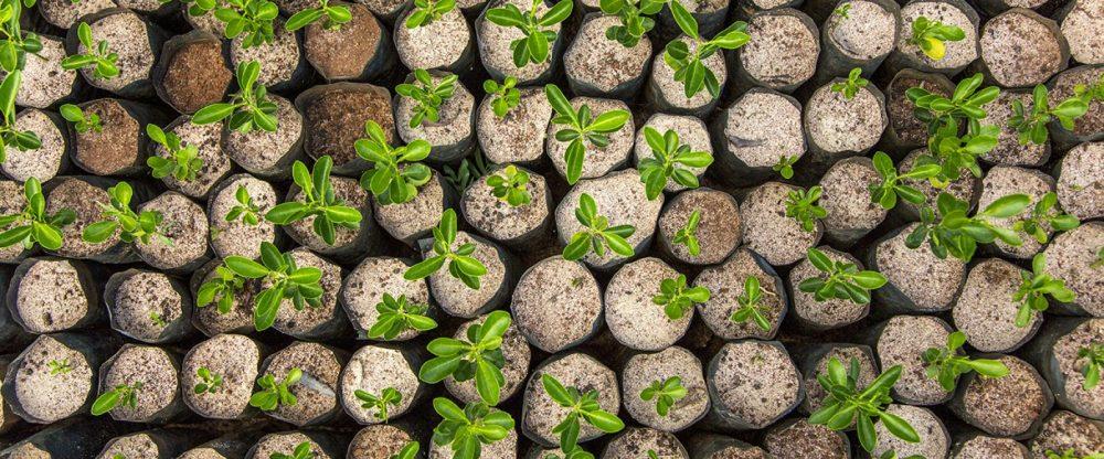 reforestacion_españa startups