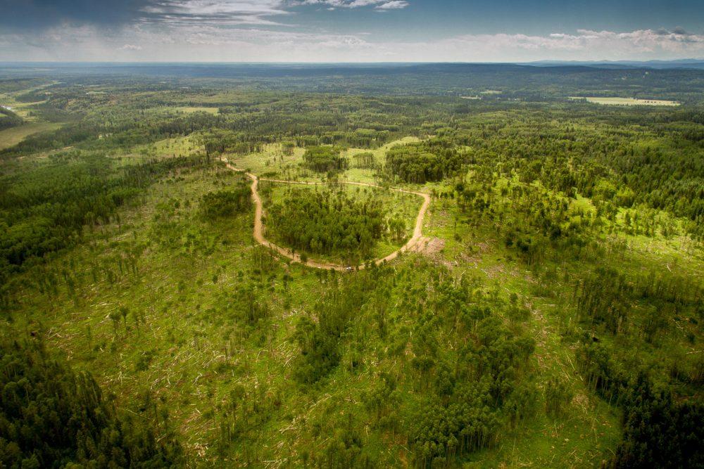 startups reforestacion