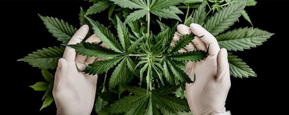 Startups cannabis españa